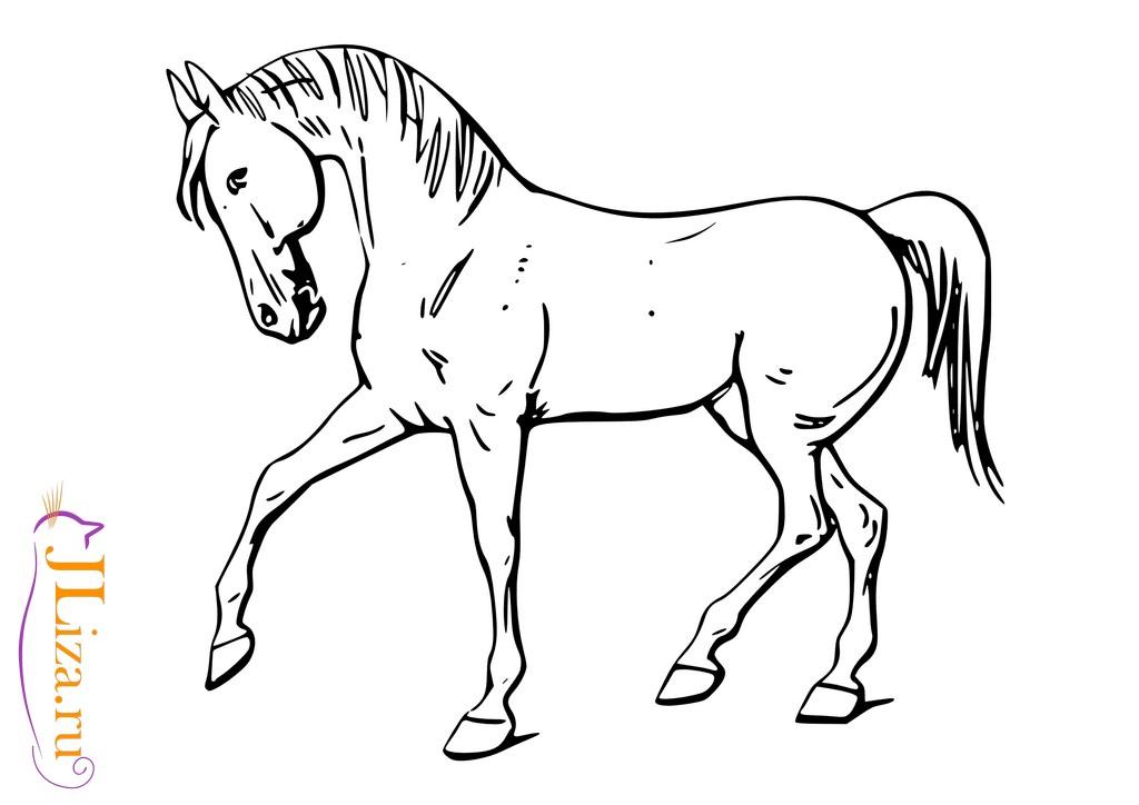 раскраска фото лошади