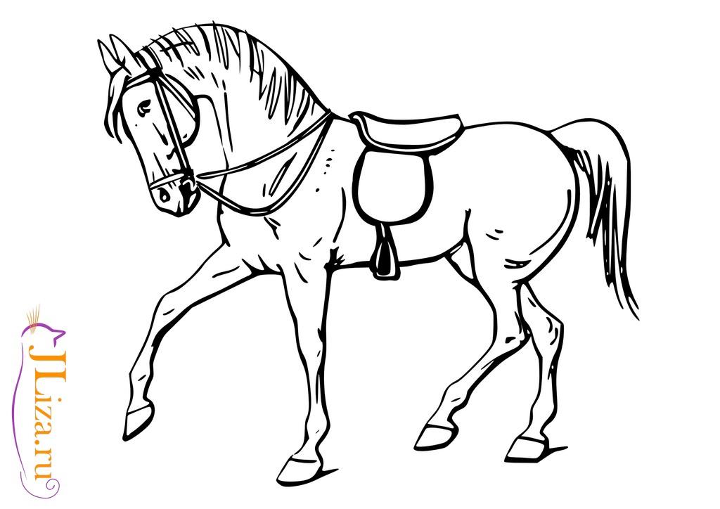 картинки раскраски лошадь для детей