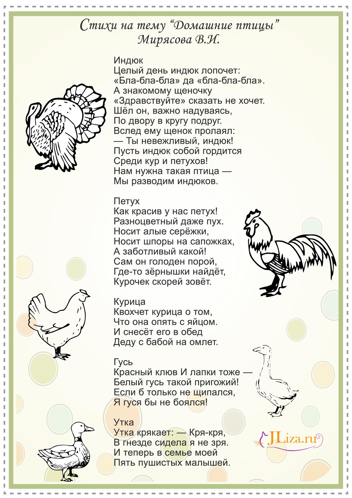 Стихи про курицу для детей короткие